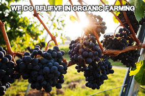 Organic farming | Hiapo